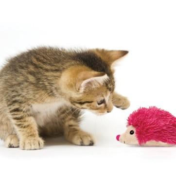plysdyr kat