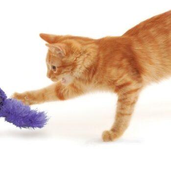 kong kattelegetøj
