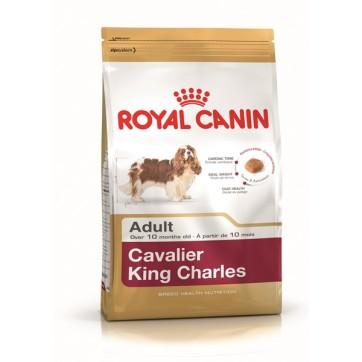 cavalie king charles voksen