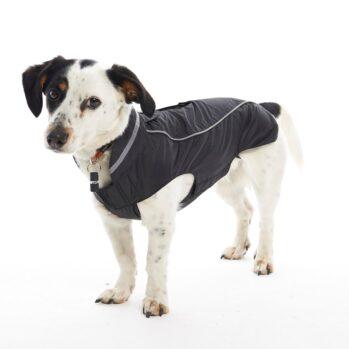 hundefrakke blackberry xxs