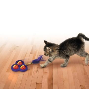 kong cat chase craze