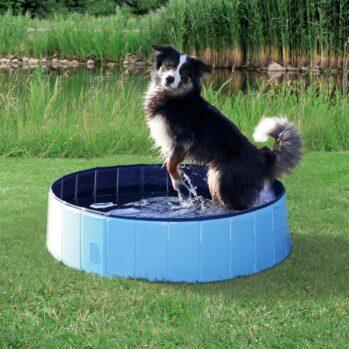 dog pool small