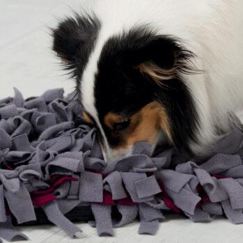 aktivitetstæppe til hund