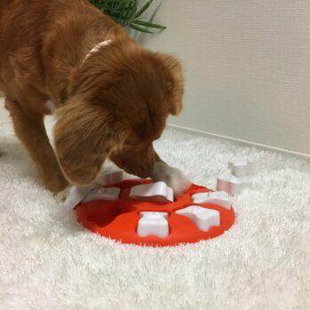 Dog Smart Orange Aktivitetslegetøj