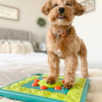 Multipuzzle aktivitetslegetøj