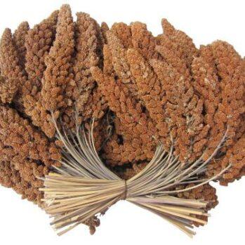 Franske Hirsekolber røde ca 500 gram
