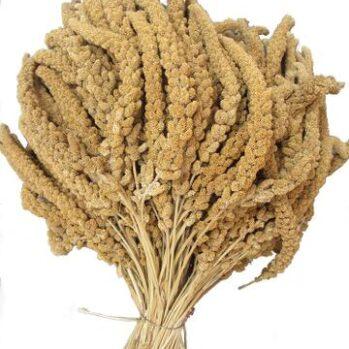 Franske Hirsekolber gule ca 500 gram