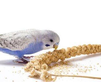 Godbidder til fugle